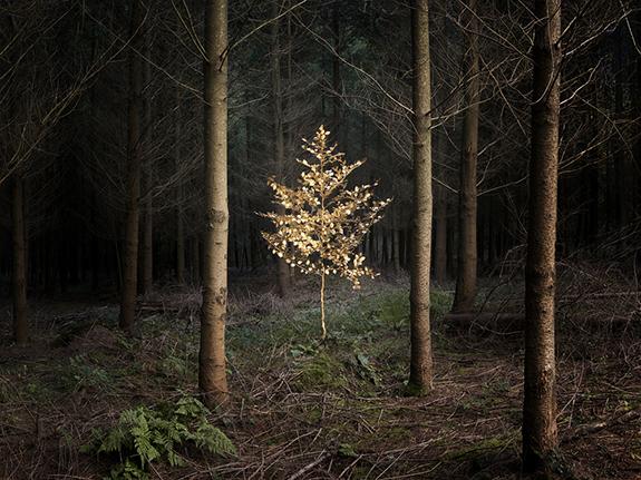 © Ellie Davies