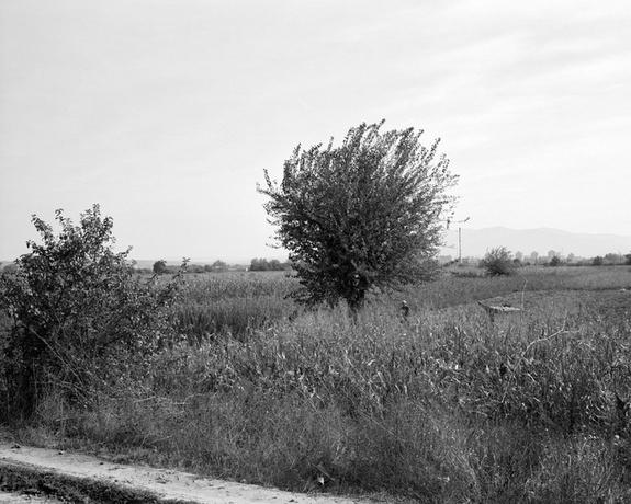 © Ivan Petrovic